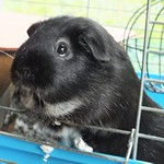 teddy králíček